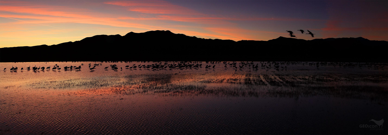 Bosque del Apache National Wildlife Refuge, North crane pond